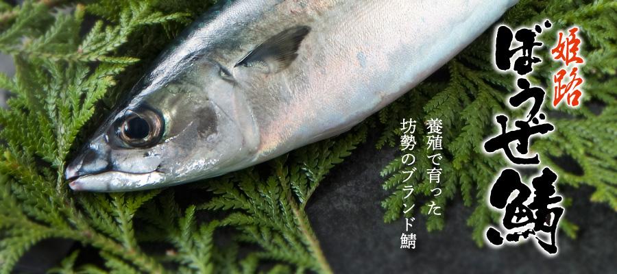 姫路 ぼうぜ鯖