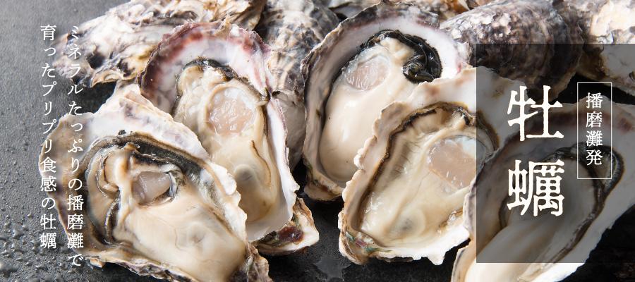 播磨灘発 牡蠣