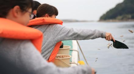 ぼうぜ鯖の餌やり体験
